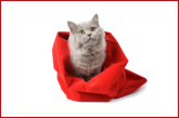 Cats_Out_of_Bag